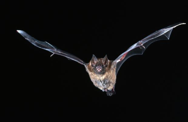 ВБразилии летучие мыши— вампиры устроили «кровавый пир», один человек умер