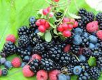 5.Черника и другие лесные ягоды
