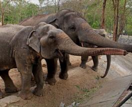 Забавное видео про животных: слон в аквариуме покорил зрителей