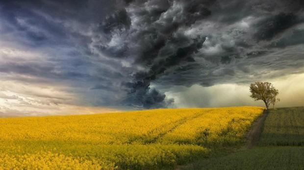 Москва погода сейчас ветер