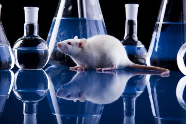 Русские  ученые работают над противораковым лекарством наоснове белка теплового шока