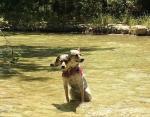 Кажется, этот пёс охраняет Философский камень