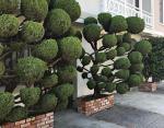 Это надо видеть: странные деревья Сан-Франциско