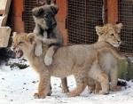 Забавные фото: дружба между животными разных видов