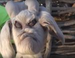 В Аргентине родился козленок с человеческим лицом