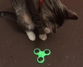 Кот хвостом крутит спиннер