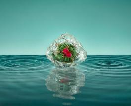Интересные фото: замерзшие цветы Паломы Ринкон