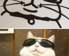 Забавные фото: смешные и правдивые портреты кошек