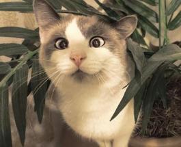 Видеоприколы про котов: шкода и умиление или на что еще способны народные любимцы