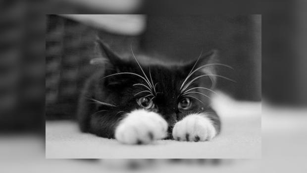 Коты все понимают