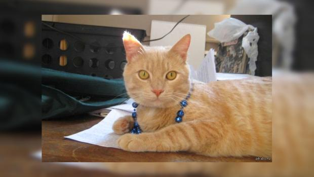 Картинки по запросу На Аляске умер кот-мэр