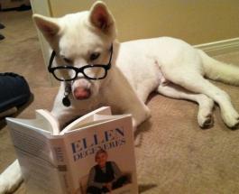 Смешные фото: собаки думают что они люди