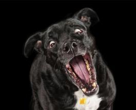 Смешные фото: животные которые попали в нетипичные и немного странные для себя ситуации