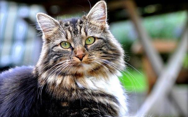 Несчастные случаи с котами