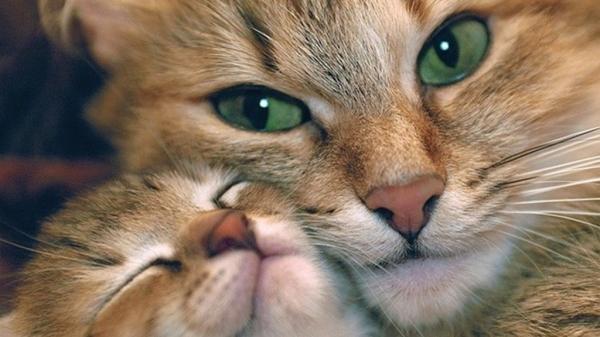 Фото животных: трогательные мамы и их забавные дети