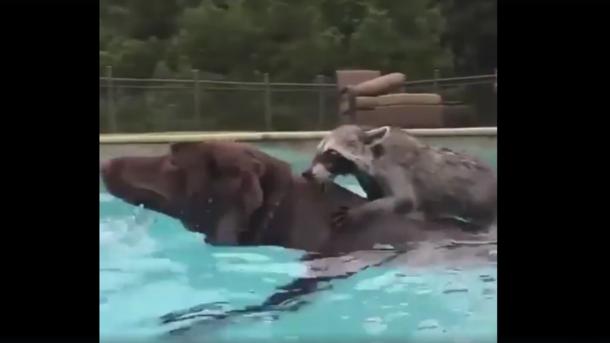 видео про животных