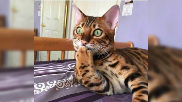 Смешные картинки животных с надписью (30 фото) • Прикольные ...   558x620