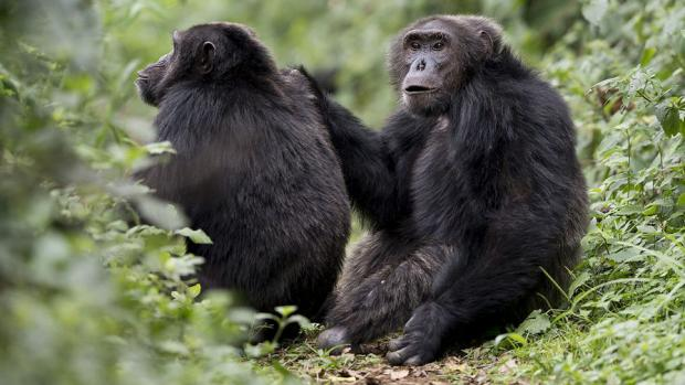 приматы