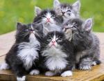 Самые дорогие в мире кошки: они стоят целое состояние