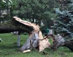 Ураган в Закарпатье нанес убытки на сумму более 75 миллионов гривен