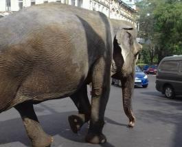 Это надо видеть: по одесским улицам прогулялся огромный слон