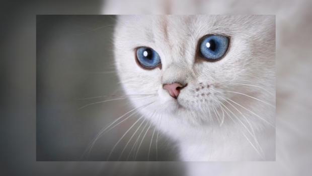Какие запахи кошки не любят больше всего и почему