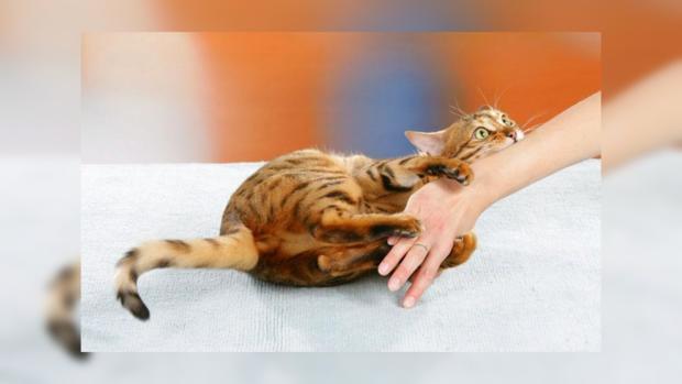 Раннее отлучение котят отматери грозит ихздоровью— Ученые