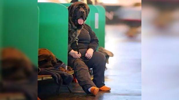 Забавные фото: смешных собак сфотографировали в самый нужный момент