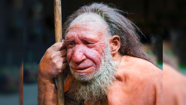 Мозг неандертальцев долго рос вразмерах— Палеонтологи