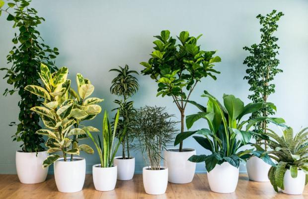 Как ускорить рост домашних растений: готовим биостимуляторы в домашних условиях