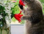 Коты — цветы жизни