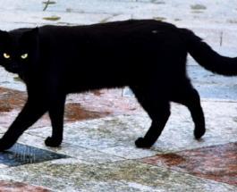 Самые необычные суеверия: интересные приметы со всего мира