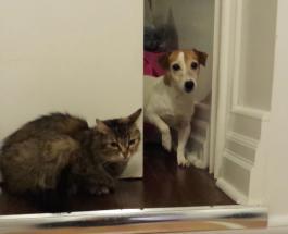 Видеоприколы про животных: как уживаются кошки с собаками