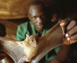 5 фактов об опасных вирусах полученных человеком от животных