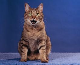 Видеоподборка с приколами про котовмоментально поднимает настроение