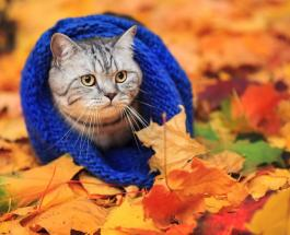 Гисметео Украина: погода на 29 октября - тепло и солнечно на юге и востоке страны