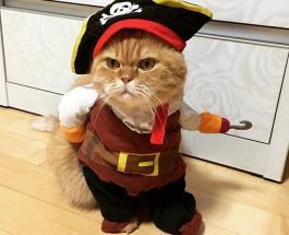 Забавное видео про животных: лучшие костюмы для питомцев на Хэллоуин