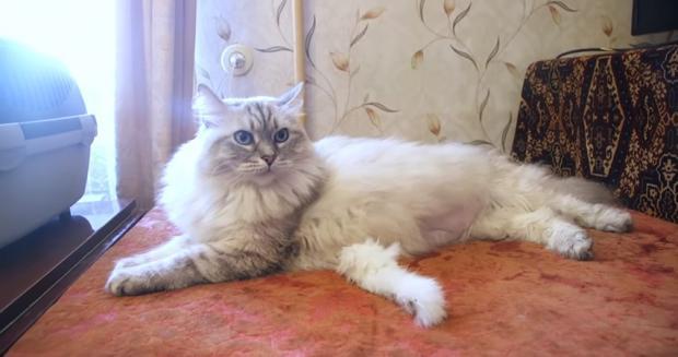 //joinfo.ua/leisure/animals/1217052_Povedenie-koshki-rasskazhet-negativnoy-energii.html