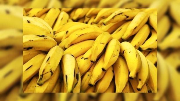 ООН: производство бананов вмире может свестись кнулю
