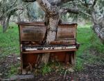 Дерево, проросшее в фортепиано, Калифорния