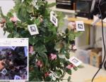 Ученые изобрели робота-пчелу и научили его опылять цветы