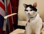У них там своя атмосфера: кошка стала сотрудником британского посольства в Иордании