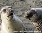 На конкурсе Comedy Wildlife Photography Awards показали самых смешных животных