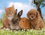 30 ноября – Всемирный день домашних животных: ТОП-15 забавных фото милых питомцев