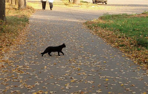 Черный кот перебежал дорогу приметы