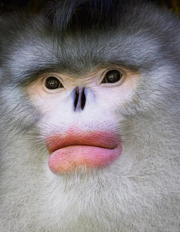 Под угрозой вымирания: 12 животных которые очень скоро могут исчезнуть с лица Земли