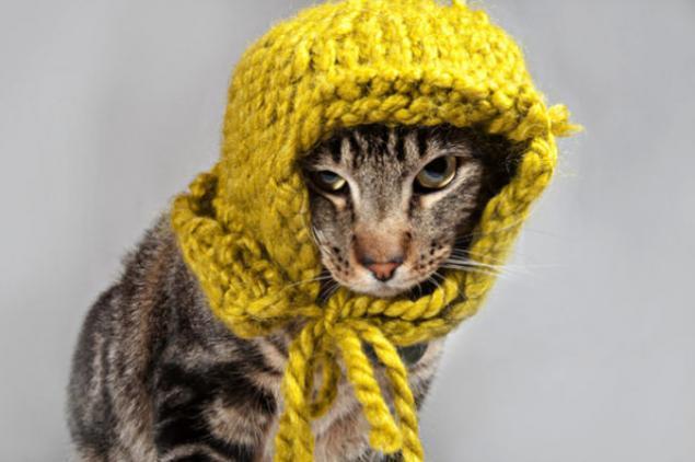 Открытки одевайся теплее котята, шубой