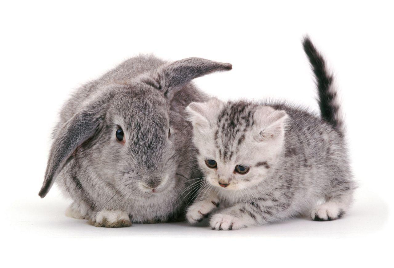 Картинки про зайцев и котов, день семьи