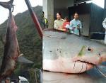 Тайвань, 2012 год, вес акулы - 1750 кг.