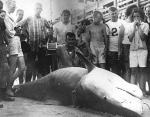 Южная Каролина, 1964 год. Вес акулы - 807 кг.